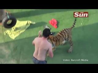 Домашний тигр